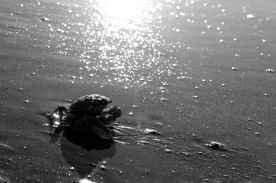 staring into the sun... goodbye dear crab